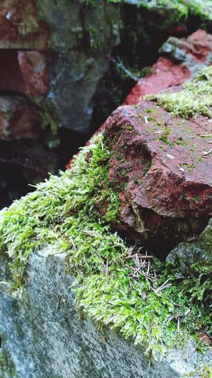 Beauty Beauty In Nature Green Water Moss Close-up Grass Plant Tree Stump Growing Young Plant Grassland Greenery