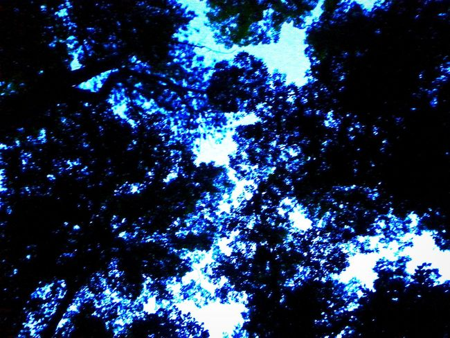 Camp Sidney Dew Camping Dusk Leaves Silhouette Blue Sky Before Nightfall