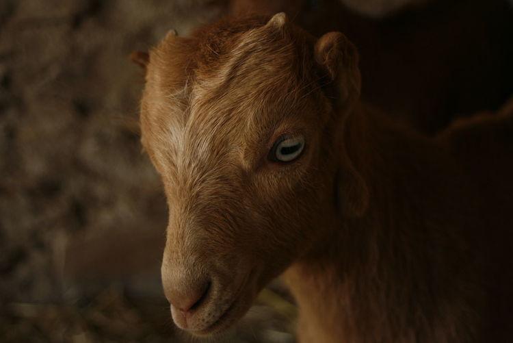 One Animal Mammal Animal Body Part Close-up Nature Animal First Eyeem Photo