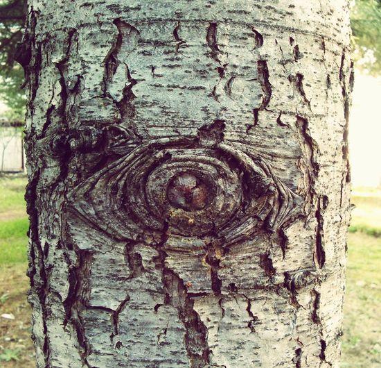 Türkiye Edirne Naturelovers Doğa Nature Eye Of Tree Tree Of Life Eye Of Horus Illuminati