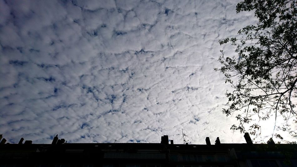 The clouds. · Düsseldorf Germany Cityscape Urban Landscape Architecture Roofs Tree Silhouette Clouds Clouds And Sky Sky Below The Clouds Simplicity White