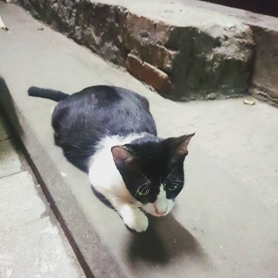 警長bb... Canton Cat Guangzhou Kitty