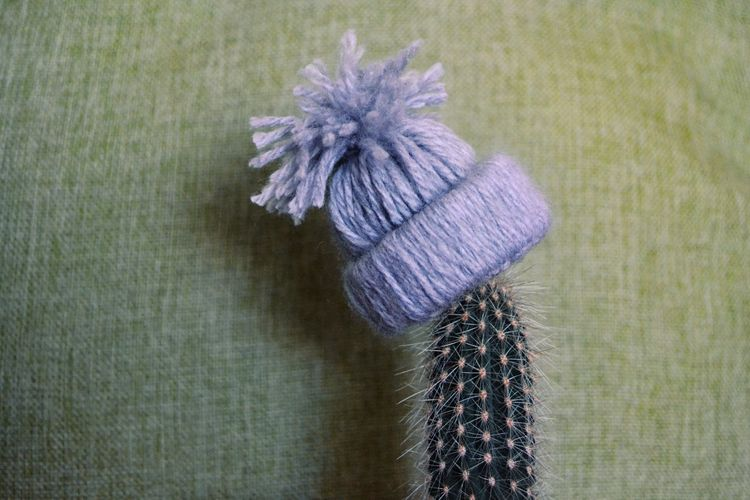 Cactus Hat Winter Time Knitting Needle Wool Flower Cleaning Equipment Knitting Purple Close-up Green Color Spiked Spiky