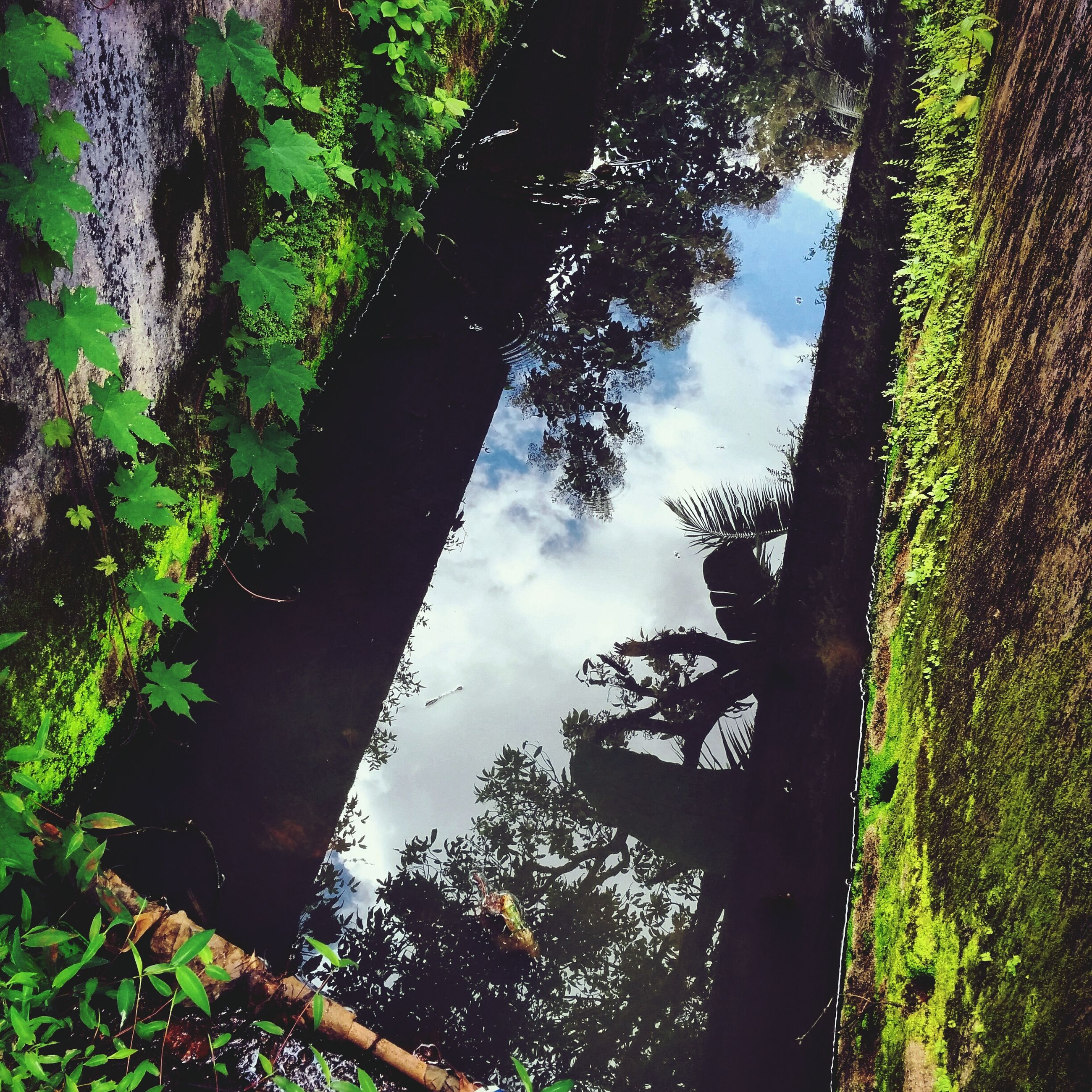 tree, growth, tranquility, tree trunk, sky, nature, tranquil scene, green color, branch, reflection, forest, beauty in nature, low angle view, scenics, water, day, outdoors, sunlight, no people, lush foliage