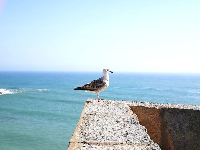 Sea Horizon Over Water One Animal Bird Water Nature Seagull Sky Clear Sky Blue Tranquility Horizon Over Sea Horizon View Outdoors Perching Horizon Line Animal Wildlife Summer Bird Watching Huawei P9 Leica
