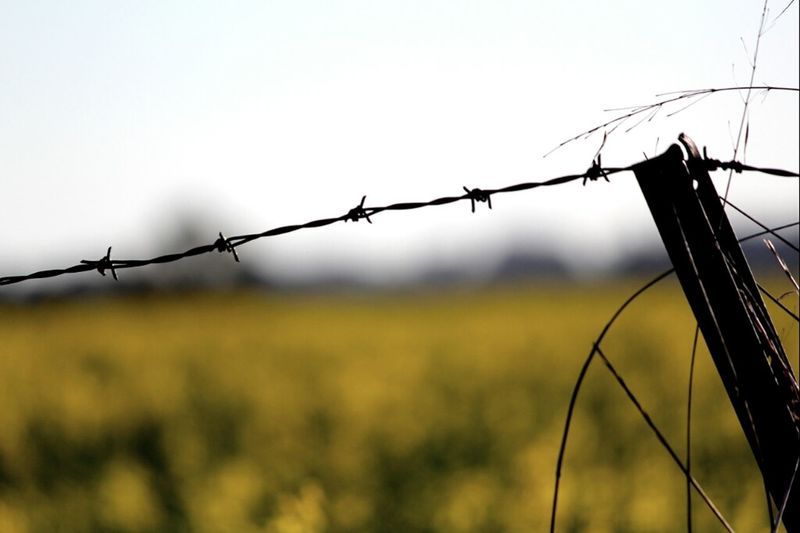 Taking Photos Fence Yellow Barbed Wire Canola Crops