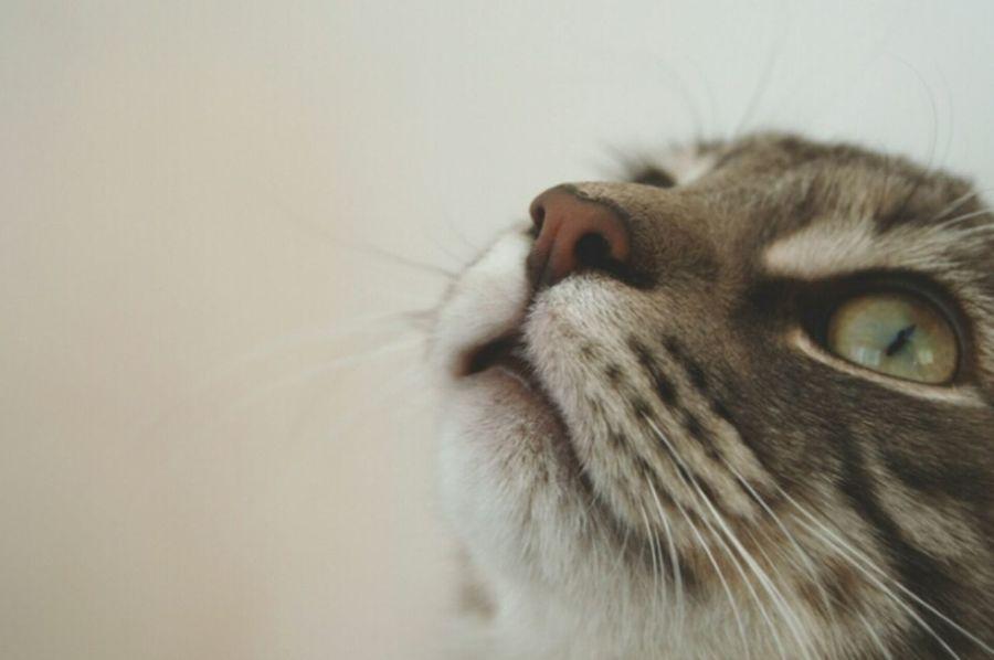Amateur_photographers_united Amateur Photography Amateur Photographer Amateur Shot Kitten Cats Of EyeEm Selective Focus Kitty Cat Its Ok