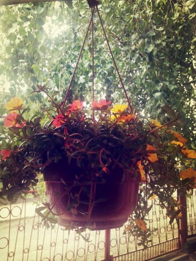 Flowers Kwiatki C: Kwiaty