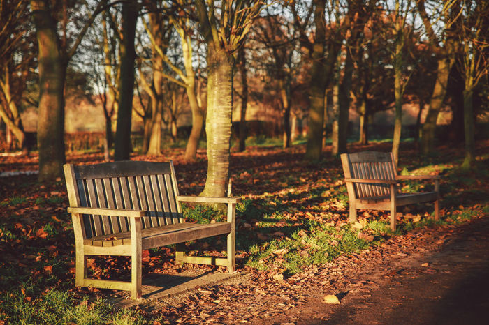 Absence Beauty In Nature Bench Chair Empty Growth Leaf Nature Nonsuch Nonsuch Park Park Park - Man Made Space Park Bench Plant Relaxation Scenics Seat Sunlight Tranquil Scene Tranquility Tree Wood - Material 43 Golden Moments
