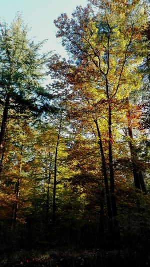 Autumn. Tree Nature Yellow Yellow Leaves Green Leaves Forest Autumn Forest Autumn Autumn 2016 Autumn Colors Dark Contrast