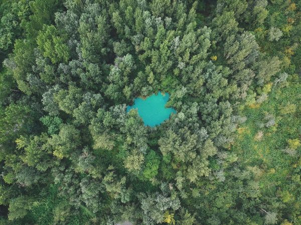 Green Color Full Frame No People High Angle View Plant Day Nature Outdoors Growth Creativity Directly Above Grass Sunlight Pattern Blue Water