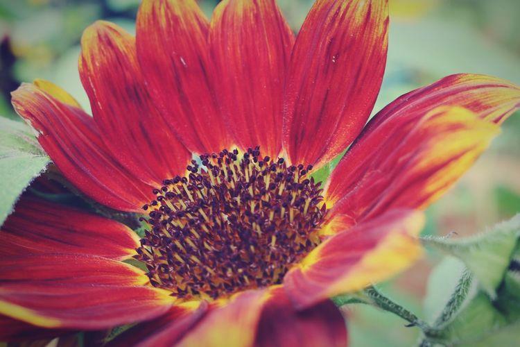 Flower EyeEm