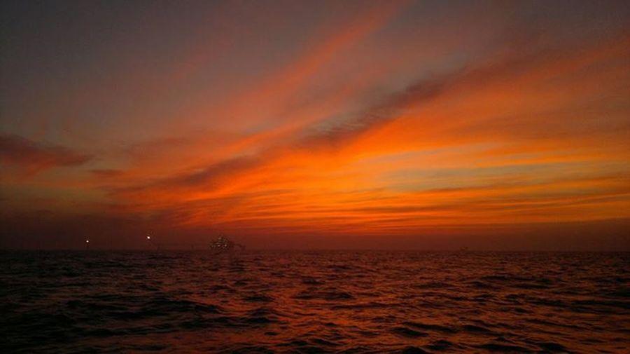 Original Unedited Sealife Sailor My Best Photo