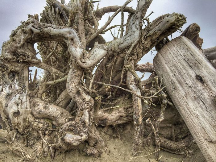 Tree Trunk Driftwood Tree Trunk Nature Outdoors Logsonthebeach Wood Beach Sky Shore Cloud - Sky Natural Condition Sand Scenics Landscape Perspective Views Scenic View Textured  (null)Backgrounds Weathered Power In Nature Beauty In Nature