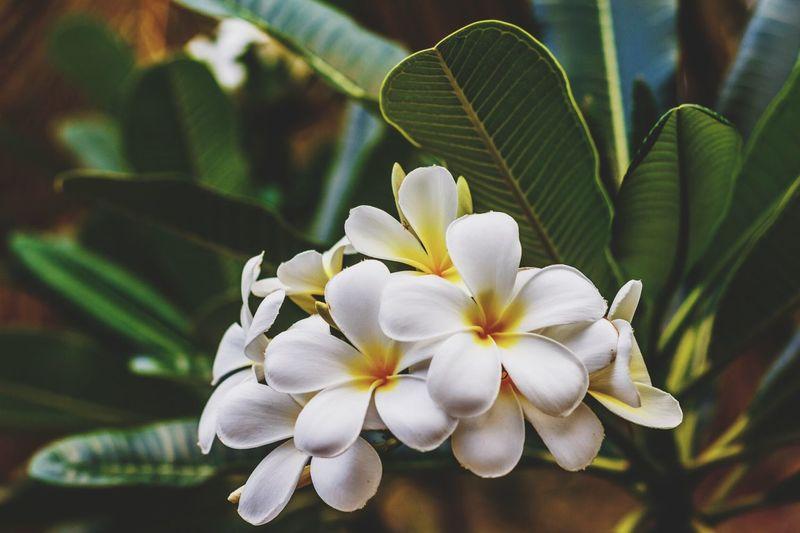 🌸 Perfumes Island 🌸 Madagascar  Flowers Tropical Climate First Eyeem Photo