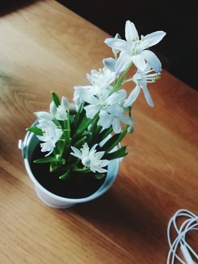 Friends Earpods Flower Flower Head Herb Wood - Material Bouquet Table High Angle View Close-up Plant
