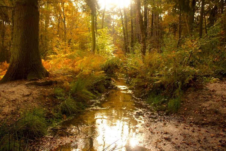 Autumn Beauty In Nature Belgium Day Forest Growth Lanaken Nature No People Non-urban Scene Outdoors Reflection Scenics Stream - Flowing Water Sun Sunlight Tranquil Scene Tranquility Tree Tree Area Tree Trunk Water