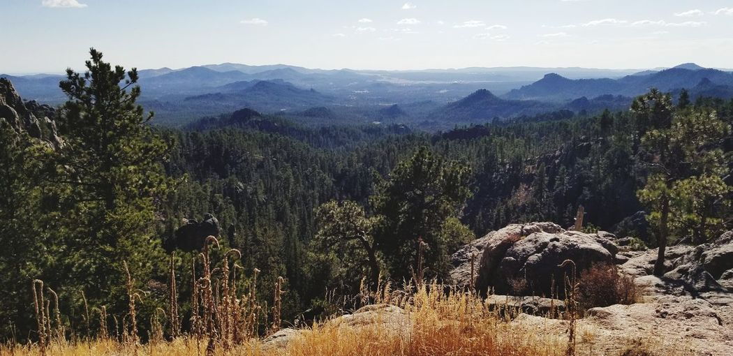 Black Hills, South Dakota EyeEm Selects A New Beginning Tree Mountain Pine Tree Pinaceae Politics And Government Sky Landscape Tranquility Calm Scenics Remote Beauty In Nature Pine Woodland Mountain Range