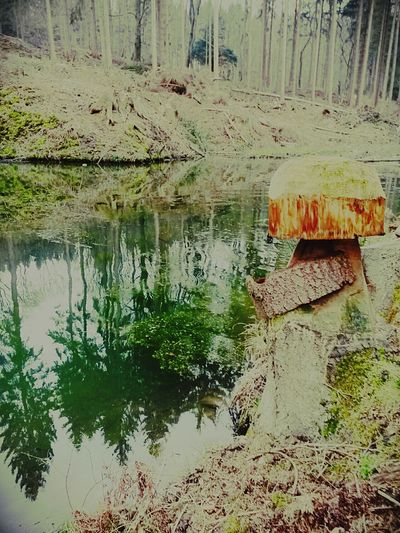 Wasser Fluss Waldspaziergang Im Wald Wald Baumstamm Tree Baumrinde Baum BACH