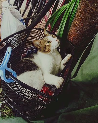 Random shot Cat♡ Animal Kitten Inside The Bucket Pandan Leaves Too Cute! Random Catlover Ilovemycat Streetphotography
