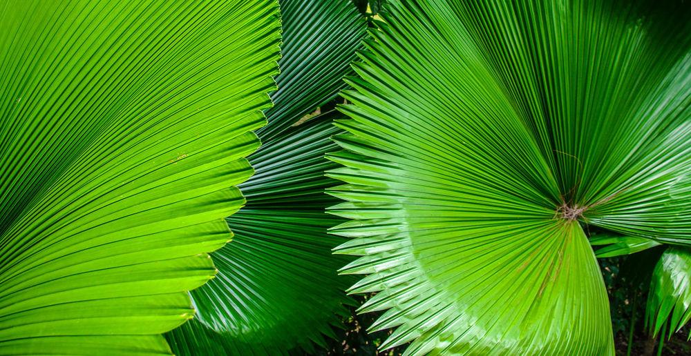 Tropical lush green foliage backdrop