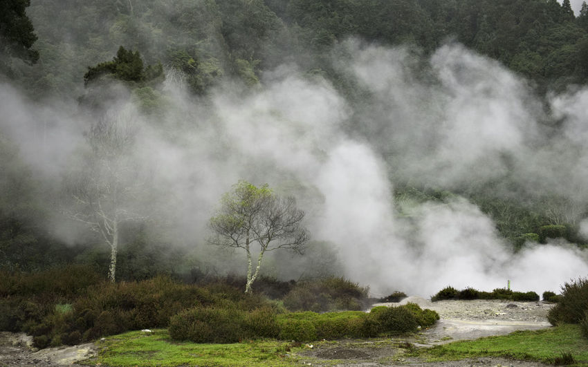 Hotspring Landscape Açores Sao Miguel Furnas Steam Scenics - Nature Beauty In Nature Tree No People Geology Outdoors First Eyeem Photo EyeEmNewHere