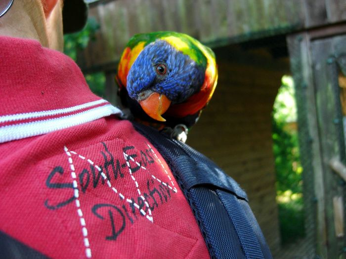 Rear View Adult Adults Only Multi Colored Only Men Headshot Men One Person Lifestyles People Real People Outdoors One Man Only Day Lori Lori Parrot Parrot Parrot Bird Parrot Lover Parrots Of Eyeem Beauty In Nature Background Hollidays