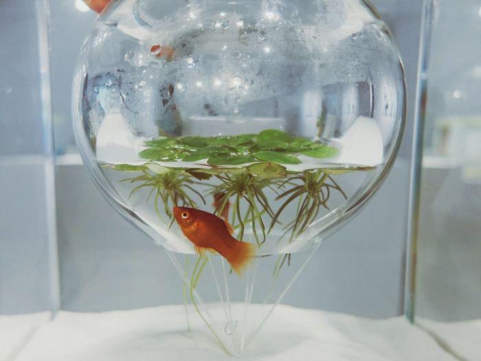 Waterscape Exhibition Art ArtWork Fine Art 三澤 遙