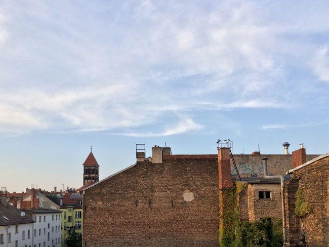 Rooftop Birds Berlin Mitte