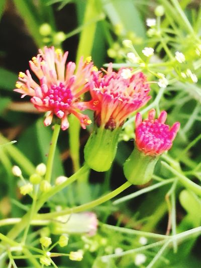 Flower Nature Plant Fragility Beauty In Nature Colorful Illuminated Beautiful Green Color Red Colo