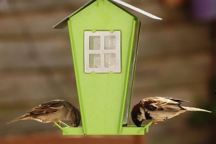 Close-Up Of Birds Feeding On Birdhouse