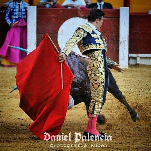 Danielpalencia , Toros
