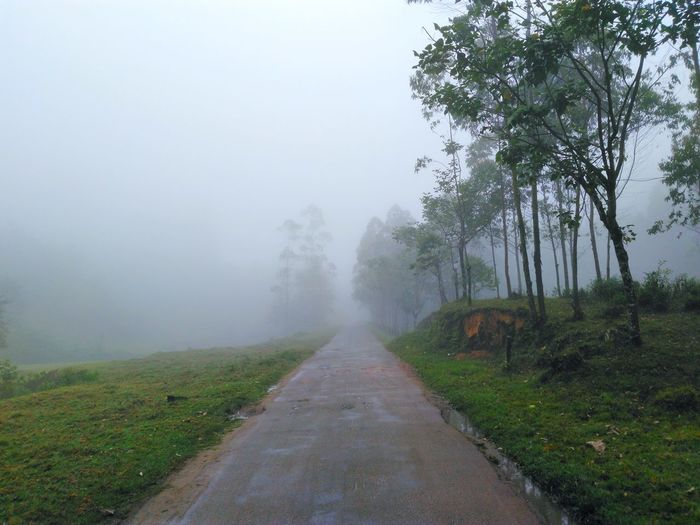 A foggy way at Munnar, Kerala. Fog Tree Weather Nature Rural Scene Landscape Day Outdoors No People Travel Kerala India Nature Scenics Tranquil Scene Tranquility Traveling Photography Munnar Travel Destinations Way Forward Hope Hopes And Dreams
