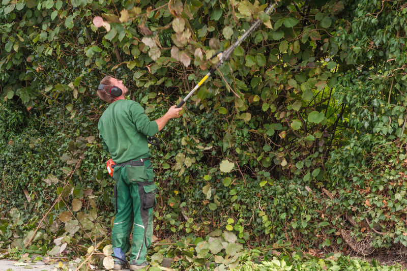 Rear view of worker trimming plants with hedge trimmer