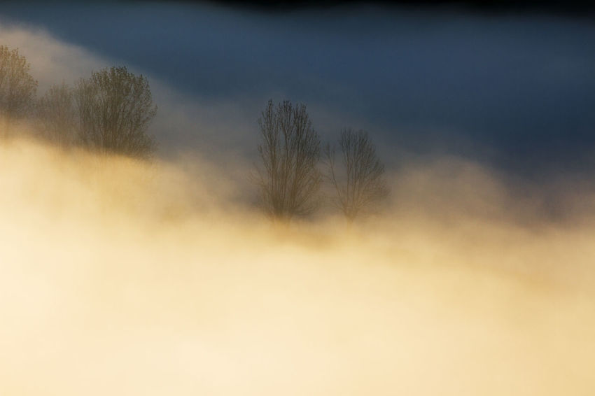 foggy morning in Apuseni Mountains Light Bare Tree Beauty In Nature Day Fog Minimalism Mist Nature No People Outdoors Sky Sunrise Tree