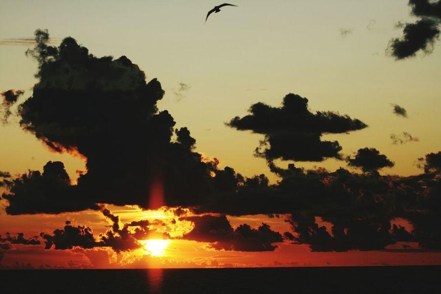Sea Sunset Silhouette Night Landscape Nature Beach Tranquility Scenics Outdoors Water Boom Shaka Laka Ganja Love