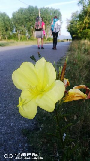 caminante no hay camino,el camino se hace al andar Flower Yellow Outdoors Day Petal Nature Plant