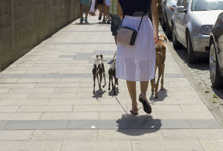 Rear view of dog walking on footpath in city