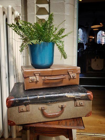 Indoor Suitcases Vintage Suitcases Plant Plant Pot