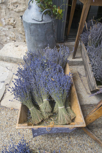 Dried brunches of lavender lying in a basket for sale on a street in France France Old-fashioned Antiques Dried Lavender Europe For Sale Lavender Lavender Bunch Store Street