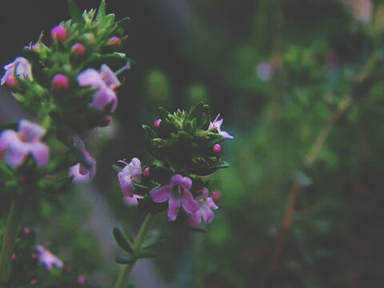 flower, plant, nature, growth, no people, fragility, beauty in nature, day, outdoors, close-up, freshness, blooming, flower head