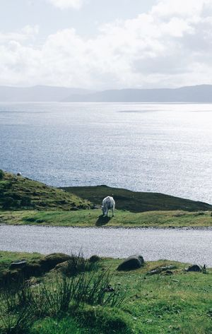 Isle of Sky, Scotland Sea Tranquil Scene Water Nature Tranquility Scenics Beauty In Nature Horizon Over Water Idyllic Outdoors Day Standing Sky Sheep Isle Of Skye Scotland Wild Landscape Scotland Wildlife Untouched Nature Endless Beauty ExploreEverything Scotlandsbeauty One Animal Full Length