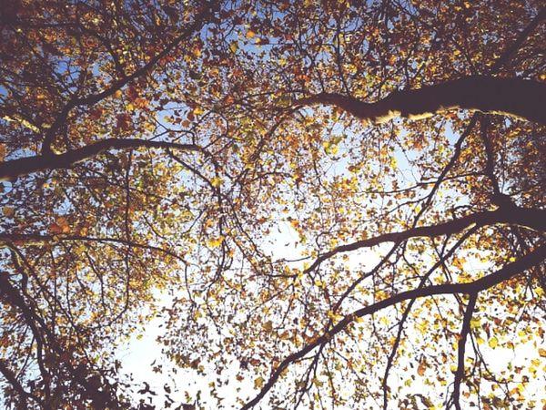 Blue&Gold. Goldener Oktober Indian Summer October Sweet October! Colors Of Autumn