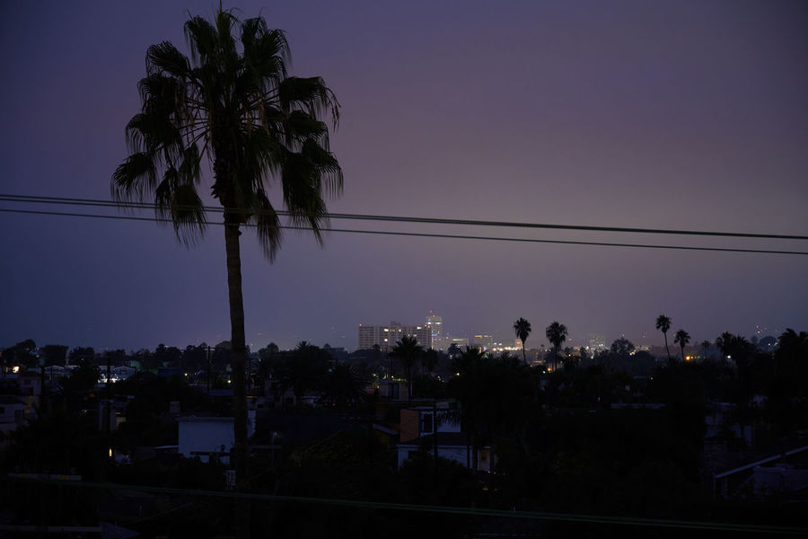 Night time photography of Venice Beach Tree Sky Plant Palm Tree Cable Tropical Climate Silhouette Nature Power Line  No People Coconut Palm Tree Night Venice Beach Venice Beach California