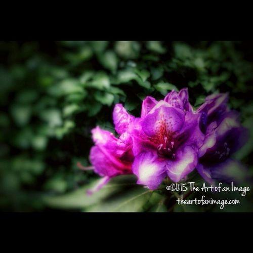 """""""Dusk Blossom"""" June 2015 ☮ www.theartofanimage.com"""