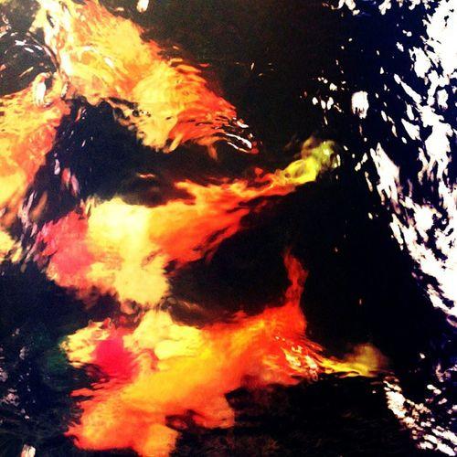 Colorfish Fish Water Aquarium color reeffish love reef colors colorful sea tropicalfish instafish fishy saltwater plants tropical art instagram picoftheday coolfish coral beauty ful summer fishtank_dailypic ocean oceanfish reeftank fishes