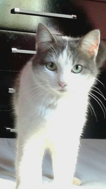 For Ever Cat Lovers God Is Great. Hi! I Love My Cat