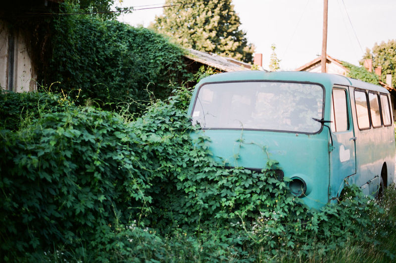 Analogue Photography Nature Old Place Ruins Abandoned Architecture Built Structure Bush Car Day Green Color Growth Land Vehicle Mode Of Transportation Motor Vehicle Nature No People Obsolete Old Old Car Outdoors Plant Transportation Tree Truck