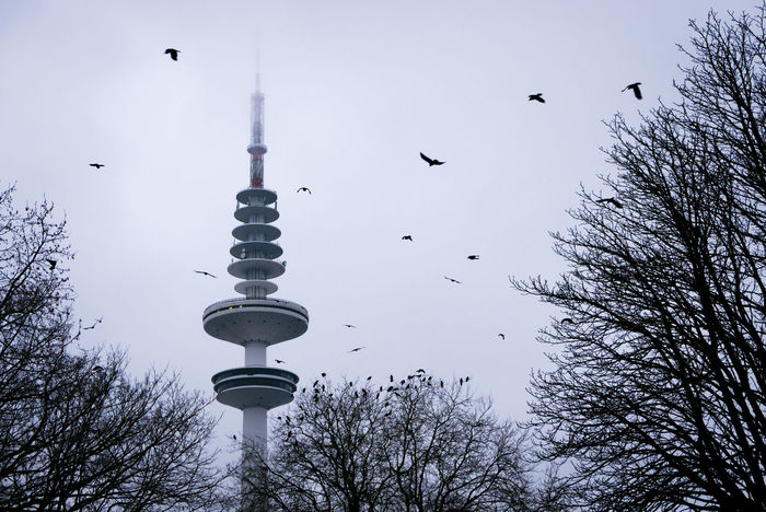 Heinrich-Hertz-Turm Heinrich Hertz Turm Heinrich-Hertz-Turm Animal Animal Themes Animals In The Wild Architecture Bare Tree Bird Building Exterior Built Structure Flock Of Birds Flying Group Of Animals Large Group Of Animals Low Angle View Nature No People Outdoors Plant Sky Spire  Tall - High Tower Tree Vertebrate EyeEmNewHere #FREIHEITBERLIN