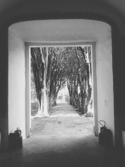 Tepotzotlan Museodelvirreinato Mexico Calm TreePorn